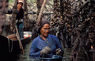 Woman wait-deep in a mangrove.
