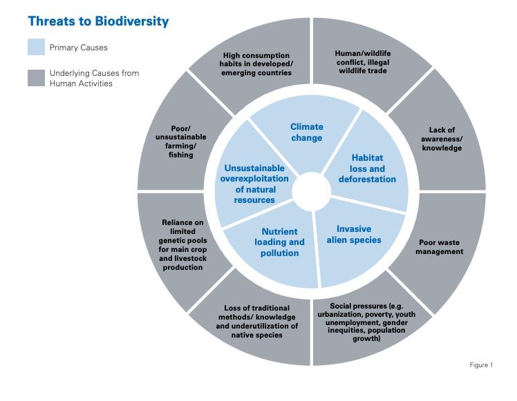 Chart on Threats to Biodiversity - Rare
