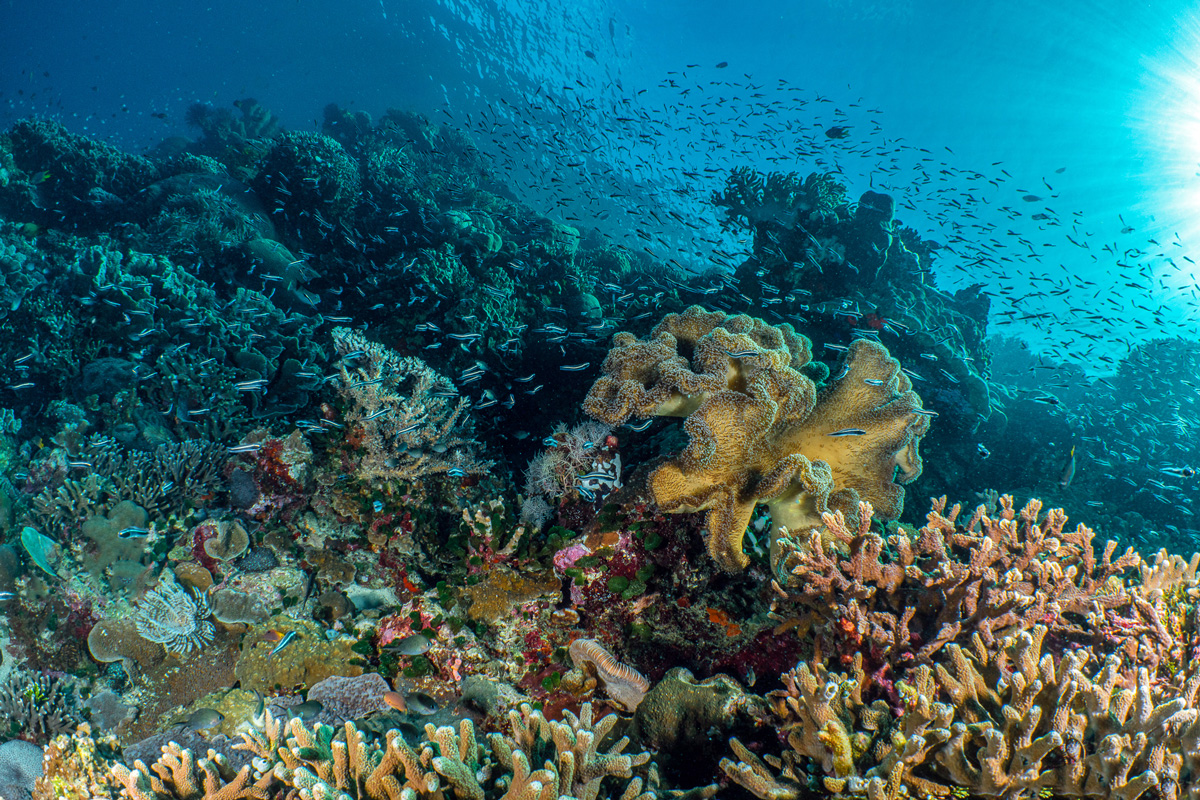 Wakatobi reef