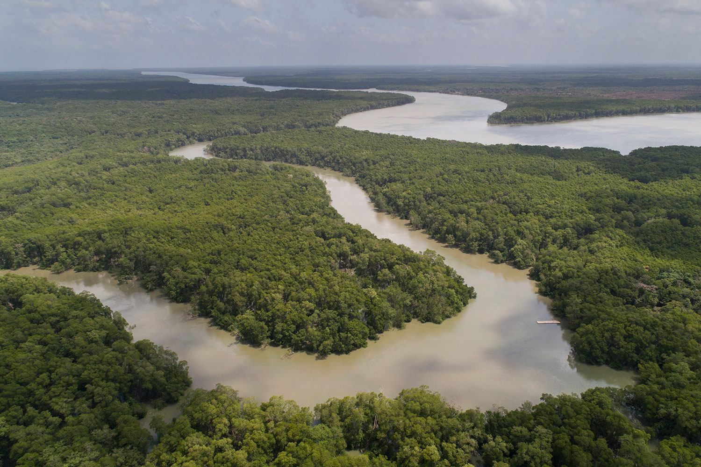 São João da Ponta Marine Extractive Reserve'S mangrove ecosystem.