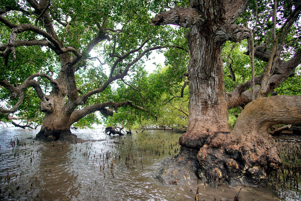 Villa Hermosa mangroves.