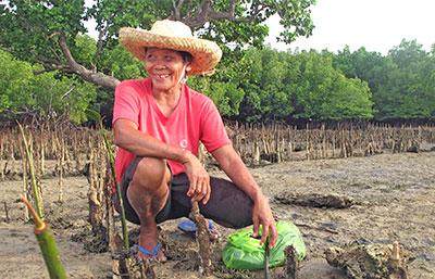 woman planting mangrove trees