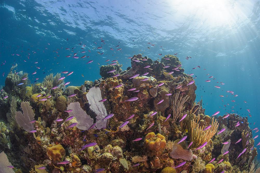Fish swimming near coral.