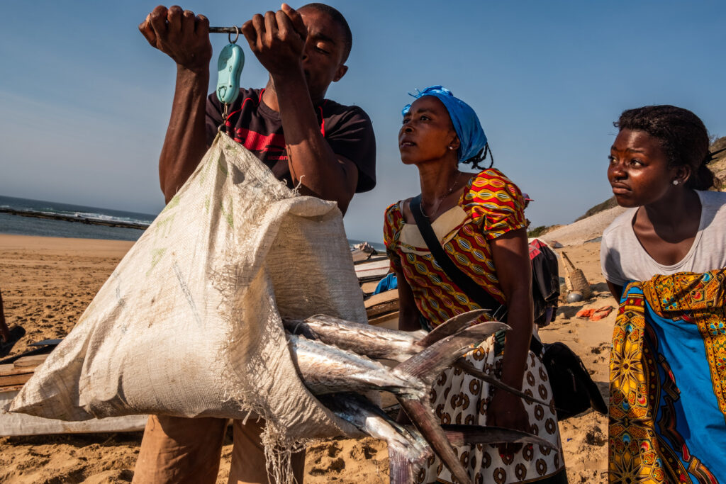 Buying King Mackerel (Scomberomorus commerson), locally known as couta or saw fish, on the beach from local fishermen.